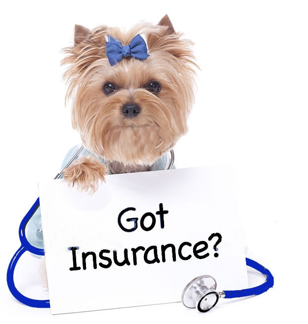 Asuransi Jiwa Hewan